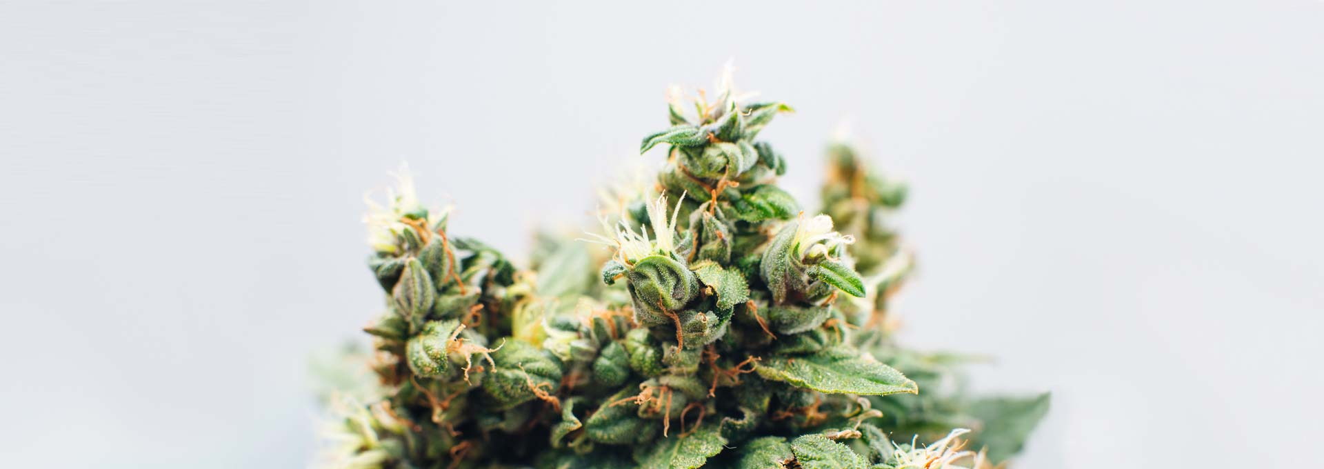 4 of the Best Cannabis Box Subscription Services