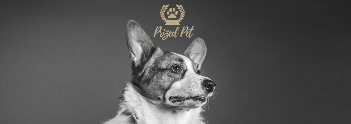 Read our Prized Pet Review