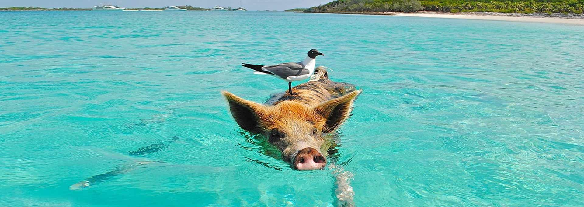 Exuma Full Day Water Tour With Swimming Pigs, Iguana, and Nurse Sharks